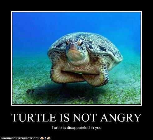 funny_pictures_turtle_is_disappointed.jpg