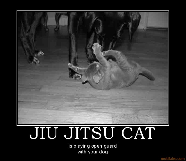 jiu_jitsu_cat_demotivational_poster_1213054438.jpg