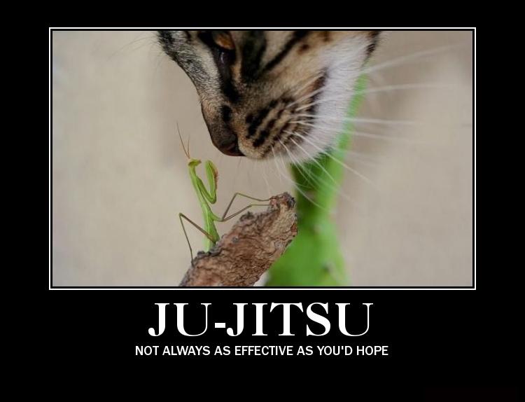 Related pictures funny jiu jitsu es